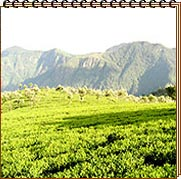 Tea and Tourism Festival - Coonoor